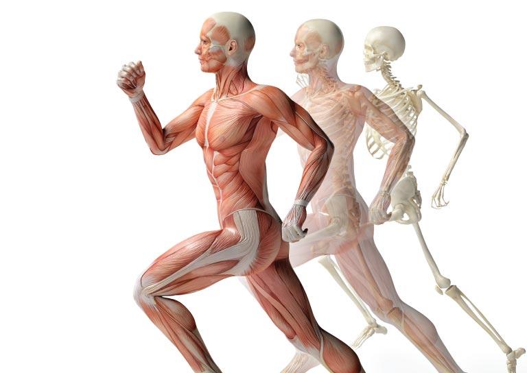 Funciones del Magnesio en el Cuerpo
